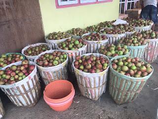 jual apel malang di palembang