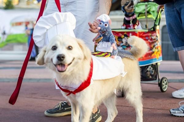 Como levar seu cachorro para a Disney