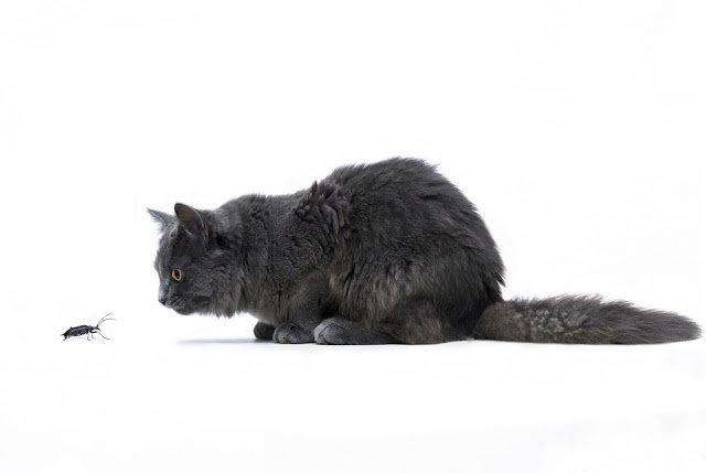 4 Dangers Of Letting Your Pet Eat Bugs Pawsitively Pets