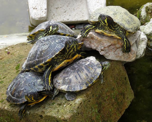 Turtles, Villa Mimbelli, Livorno