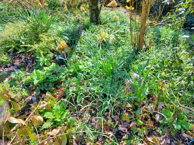 An overgrown garden border