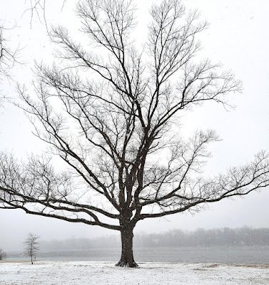 The limbs of a leafless tree against a gray winter sky. There is snow on the ground.