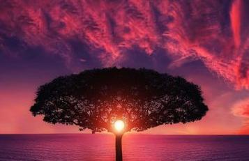 Pengertian Merkle Tree & Merkle Root
