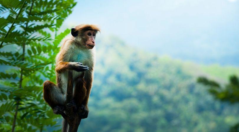 Arti Mimpi Melihat Monyet Berdasarkan Pandangan
