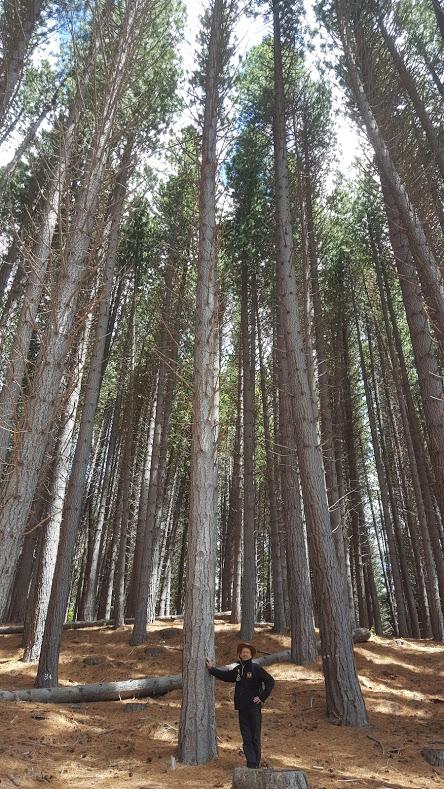 Bos in Patagonië, Argentinië