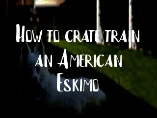 How to crate train an American Eskimo
