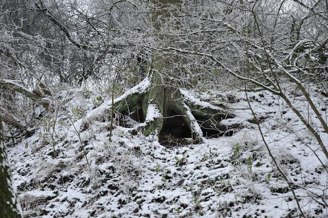 Siedlec średniowieczne grodzisko stożkowe