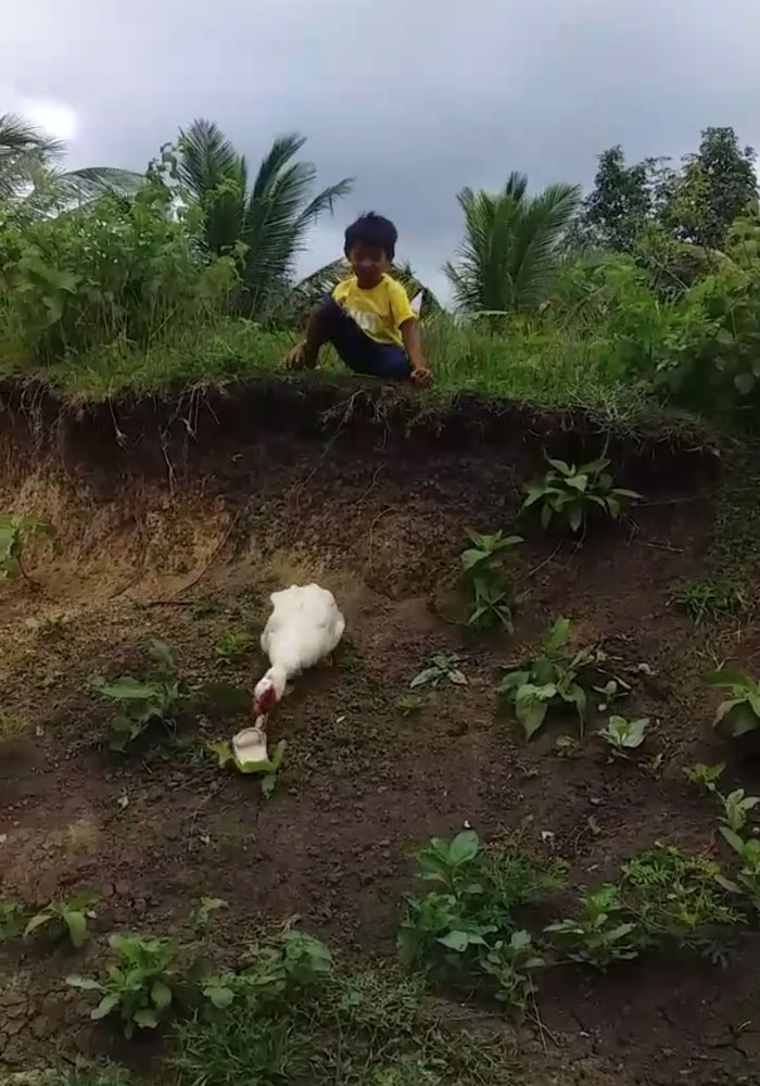 Kind Duck Returns A Boy's Lost Slipper In A Viral Video