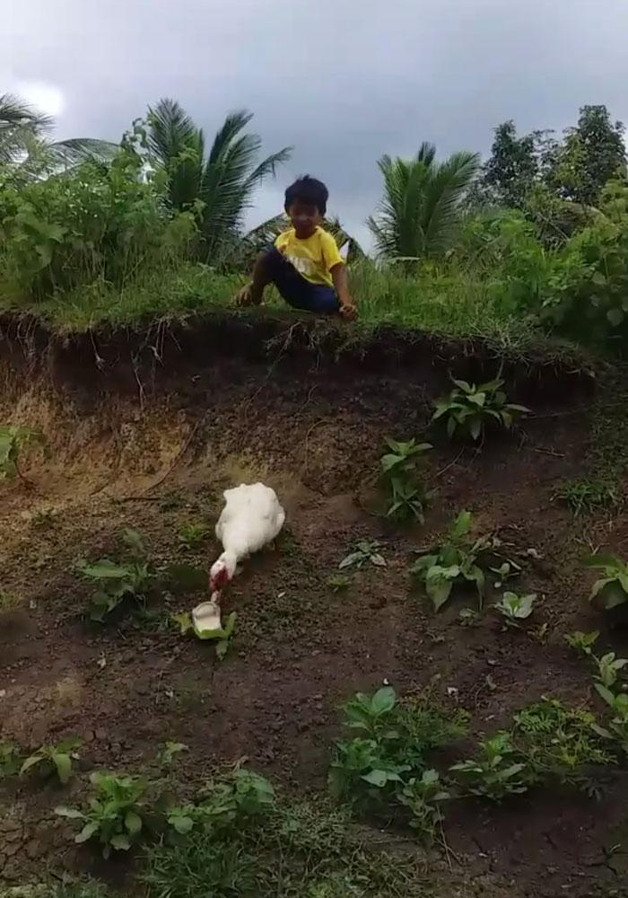 Kind Duck Returns A Boy's Lost Slipper In A Viral Video