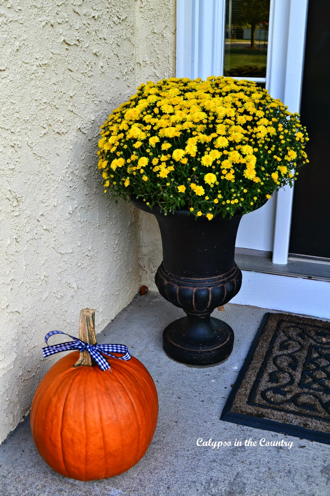 Mums in black urn for fall