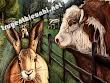 Truyện ngụ ngôn song ngữ : Thỏ Rừng và những người Bạn