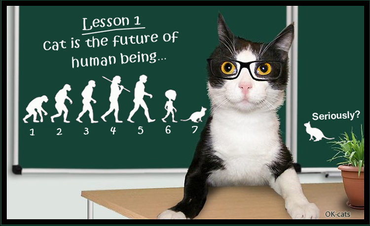 Photoshopped Cat picture • Lesson 1: cat is the future of human being and they rule the World...