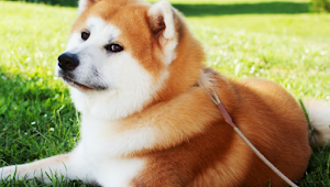 10 Aggressive Dog Breeds That Are Best Suited for People Without Kids