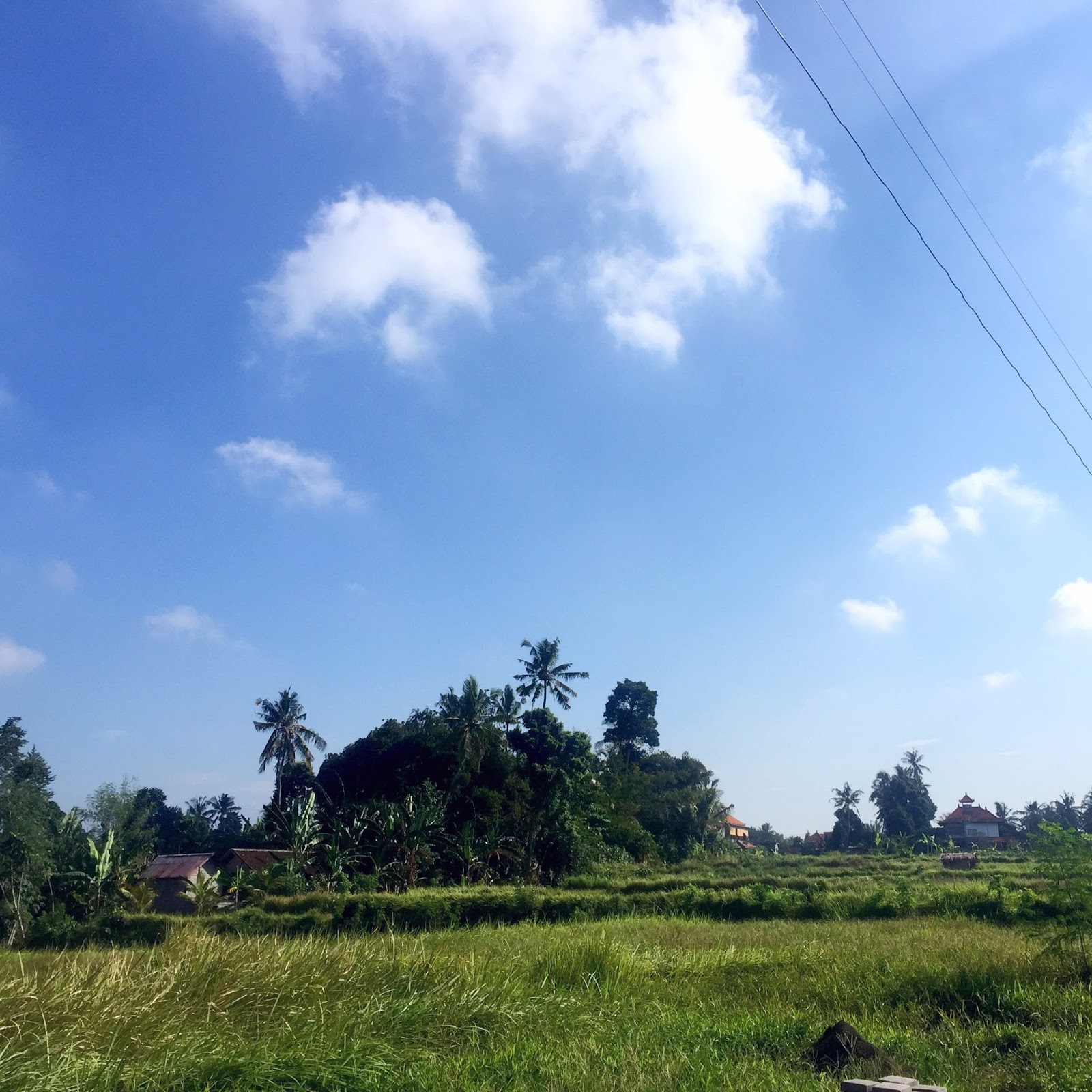 Rice fields, Ubud