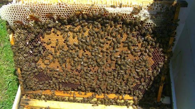 Έξυπνοι χειρισμοί-Περισσότερα μέλια! Γιά παλιούς και νέους μελισσοκόμους...
