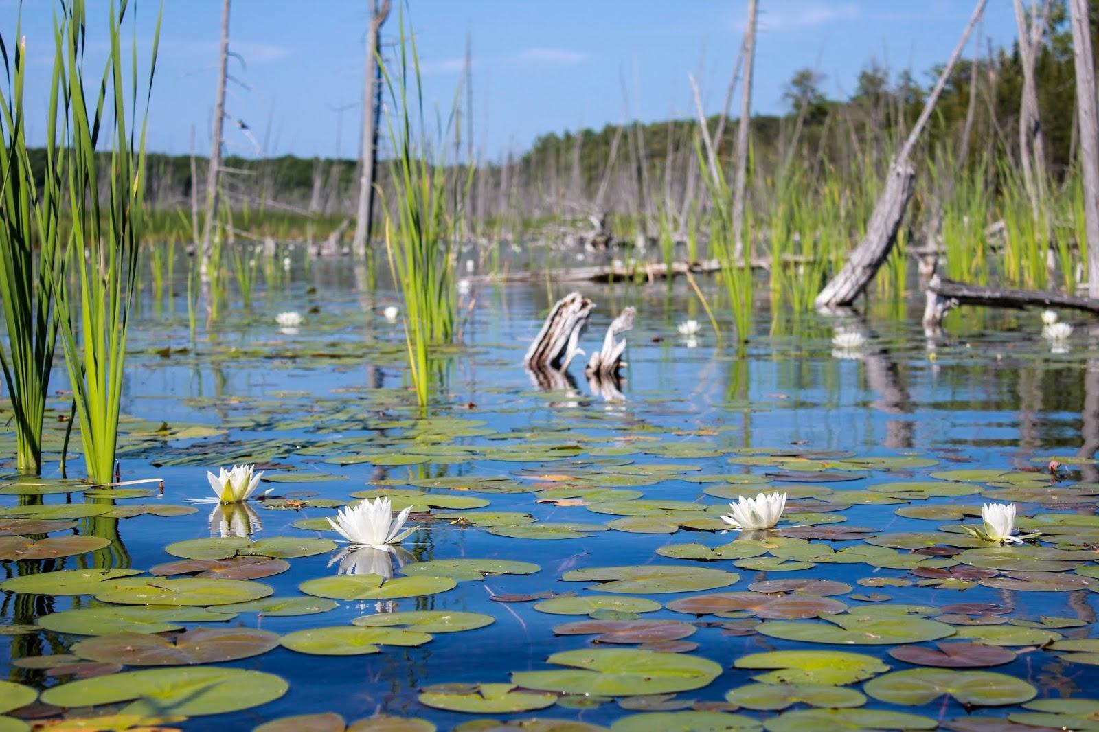 kettle's lake at awenda provincial park