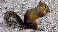 Squirrel pictures_Rodentia Sciurus