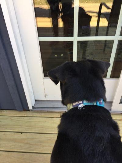 https://gabithedog.blogspot.com/2020/03/wow-im-finally-back.html