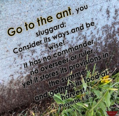 Verse over the top of ants covering a sidewalk with dandelions nearby.