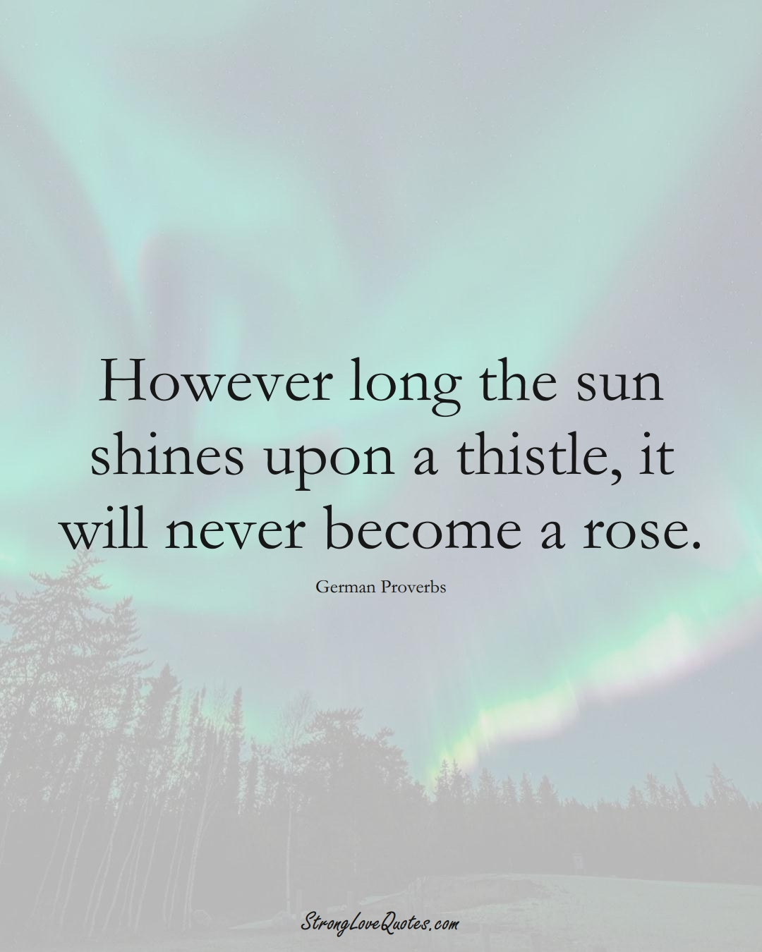 However long the sun shines upon a thistle, it will never become a rose. (German Sayings);  #EuropeanSayings