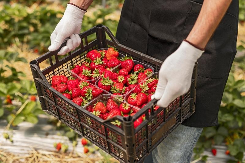 """Tarladan çatala gıda güvenliği için """"Kullandığımız Pestisitleri Biliyoruz"""" projesi"""
