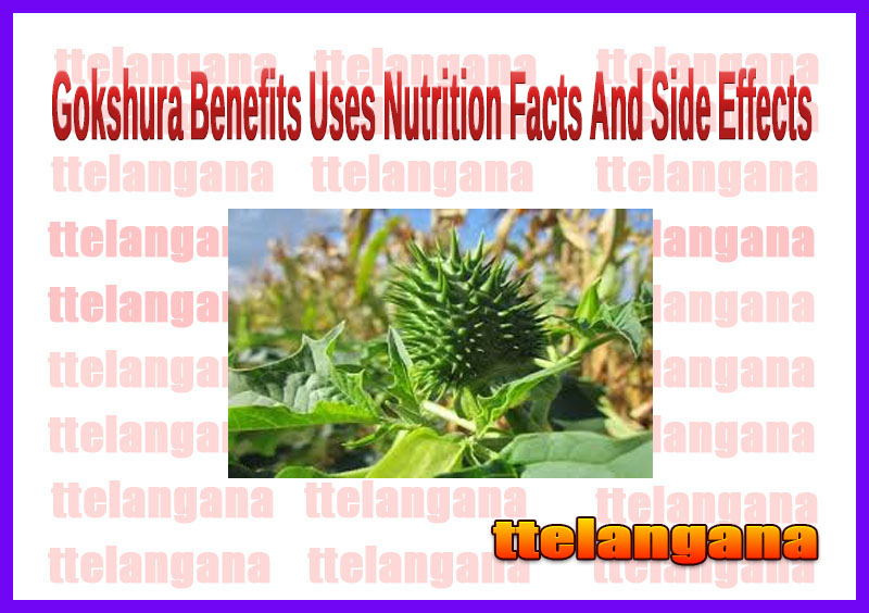 Gokshura Benefits Uses Nutrition Facts And Side Effects
