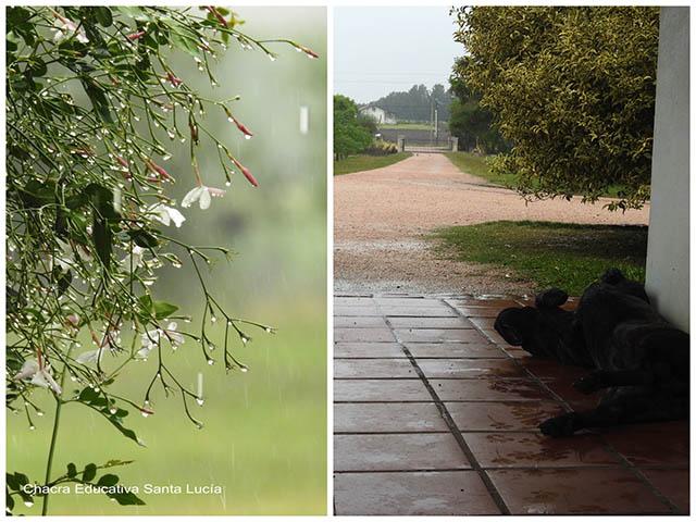 Jazmín bajo la lluvia / perro  contento con la lluvia - Chacra Educativa Santa Lucía