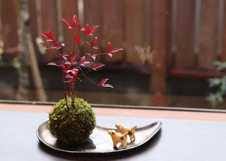 庭を背景にしたナンテン苔玉の完成写真