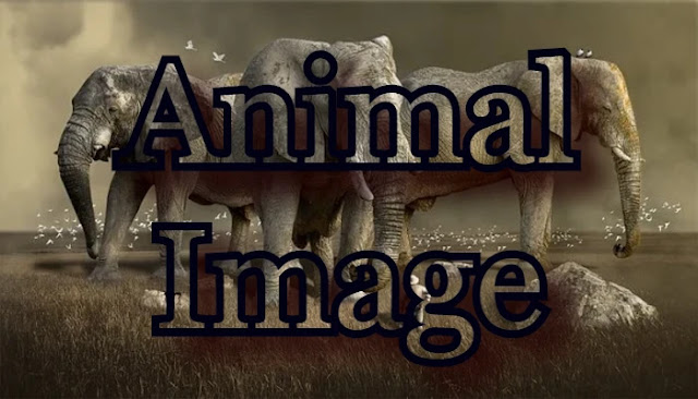51+ Animal Name in Hindi and English with Picture