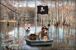 Westie and Basset Hound Pirates