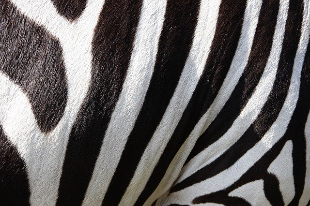 Why many animals are black and white? The Truth