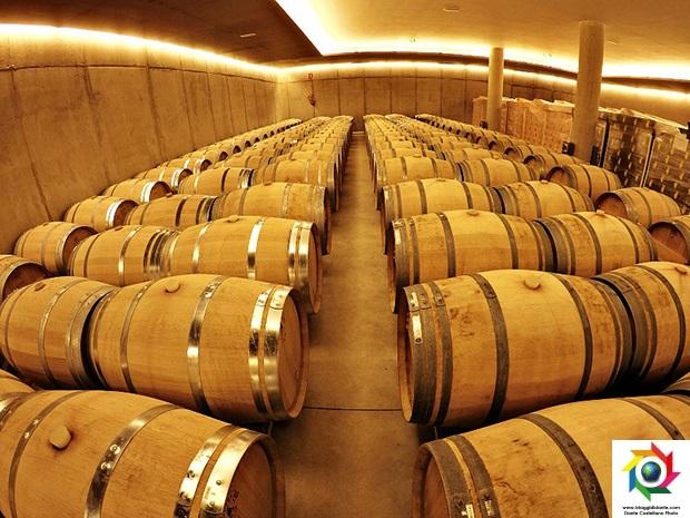vino catalano