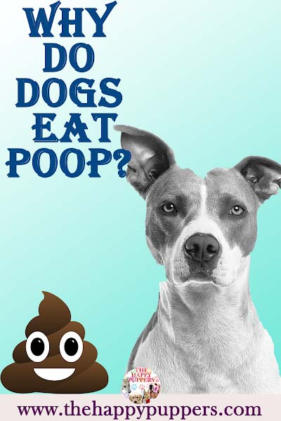 Why dogs eat poop?