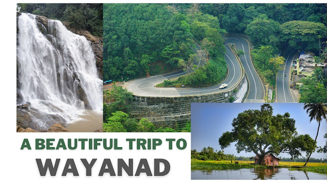 wayanad tour guide, places to visit in wayanad