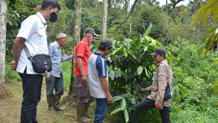 Komunitas Kopi Solok Rajo yang difasilitasi CSR PT Semen Padang