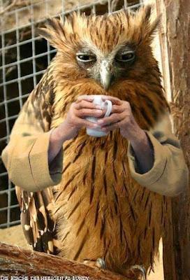 Müdigkeit am Morgen lustige Kaffee Bilder