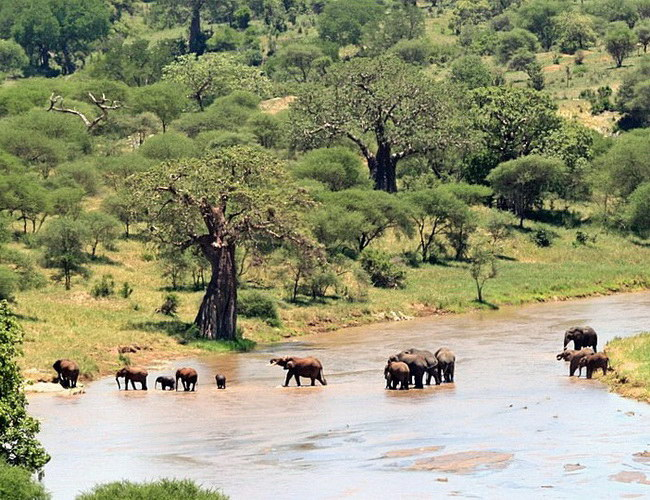 Xvlor Tarangire National Park is gathering center for African elephants