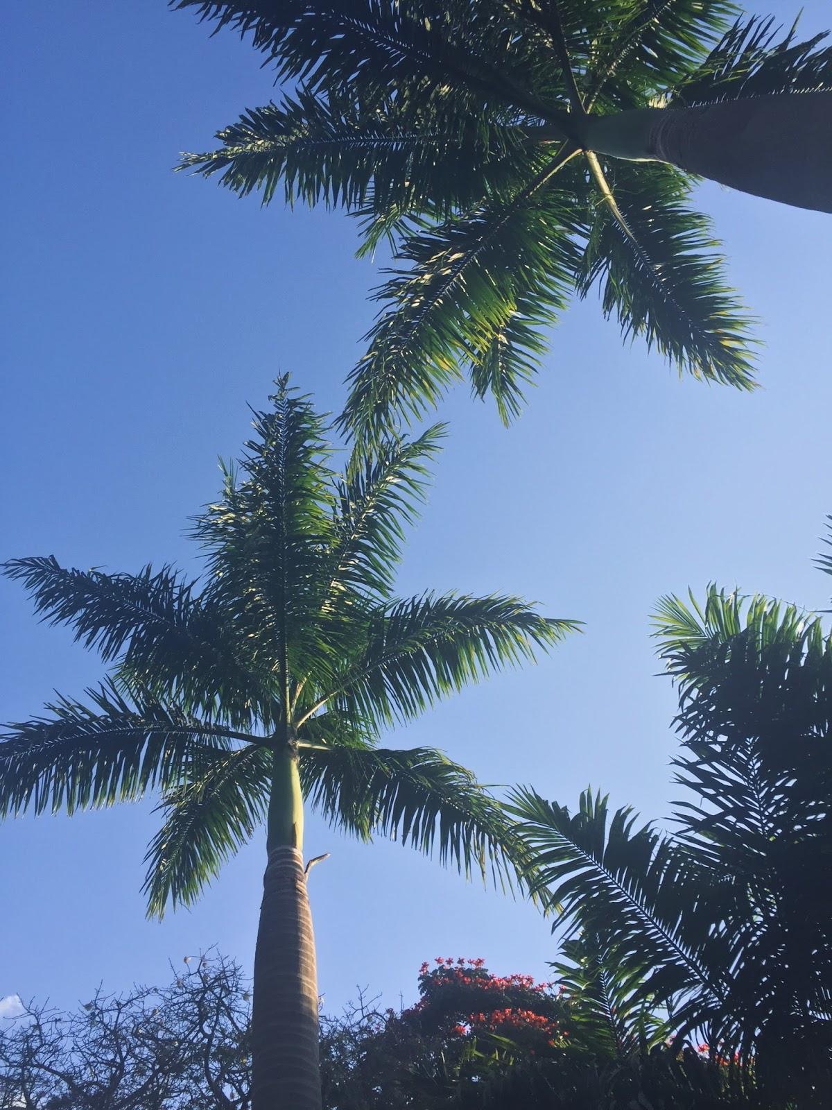 Palm Trees Nairobi