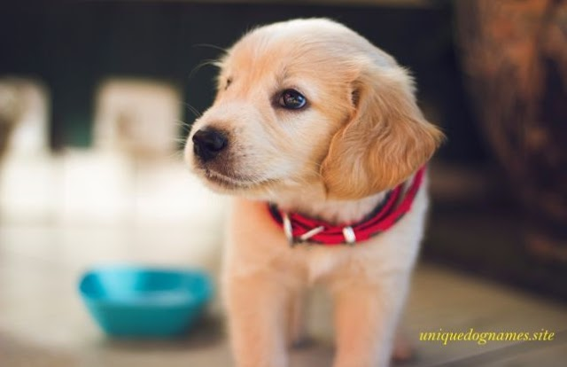 Unique Dog Names | Top Dog Names of 2020