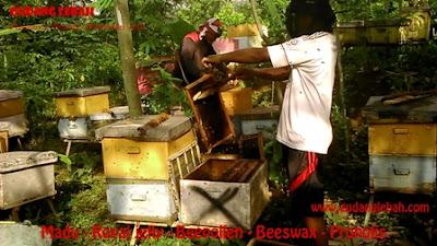 jual madu dibandung, penjual madu asli, penjual madu dibandung, penjual madu di jabodetabek, jual madu di bogor