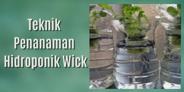 hidroponik sistem wick
