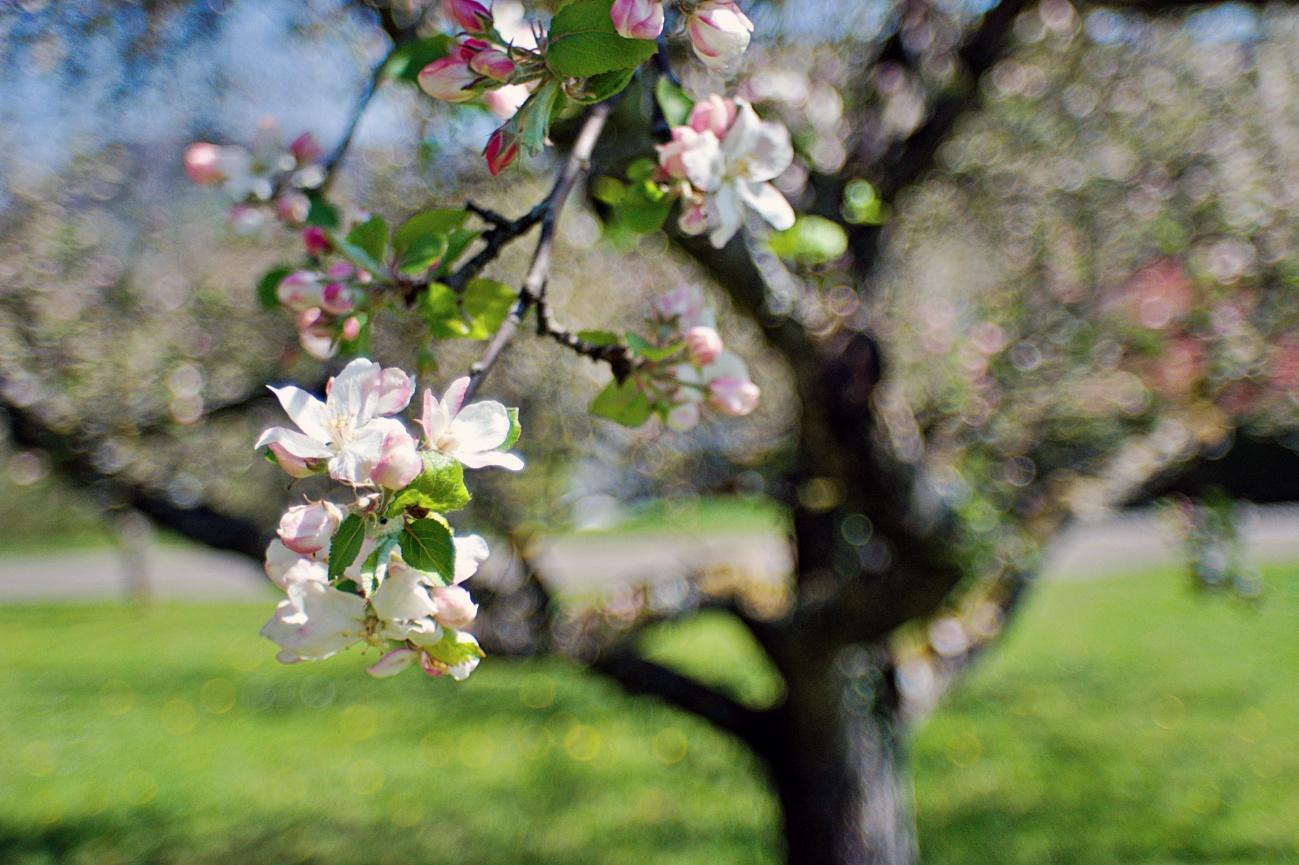 55€ Altglasausrüstung - Bild des Tages #69 — Apfelblüte