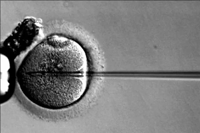 https://www.notasrosas.com/Ginecólogo holandés utilizó su propio esperma para engendrar 17 niños por inseminación