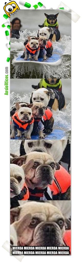 Chistes de Animales Perros Surfeando