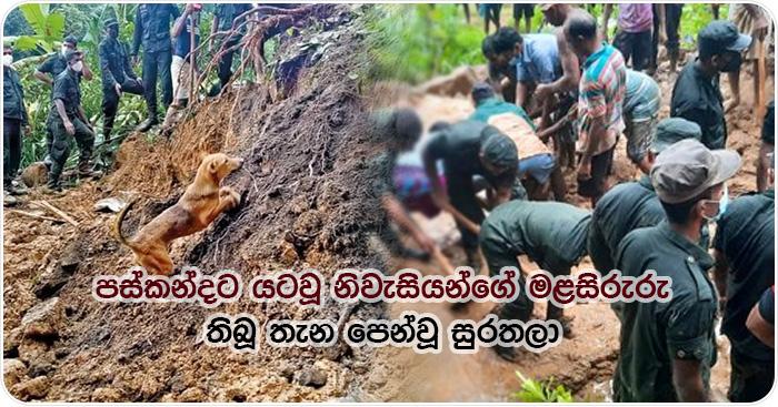 dog search dewanagala deadbody