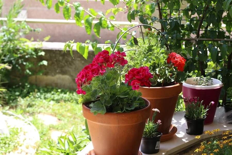 las-plantas-sienten-emociones