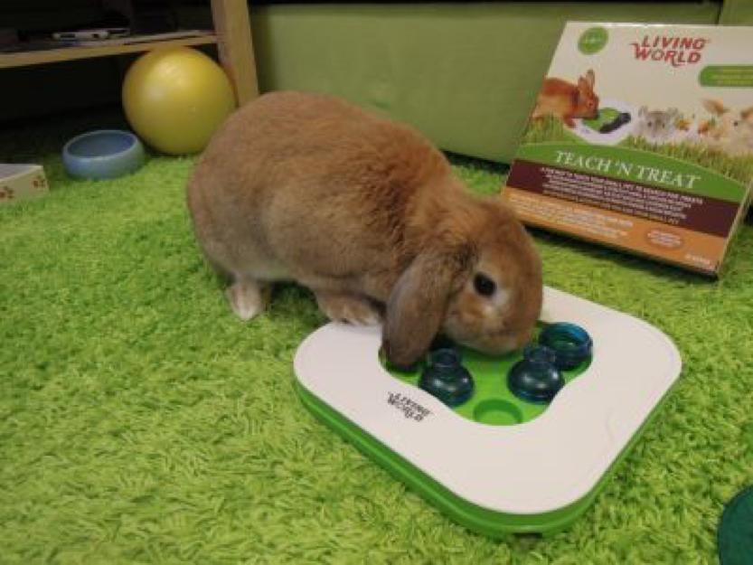 Juegos para conejos free trendy trixie parque cubierto con red para conejos y cobayas juegos - Juguetes caseros para conejos ...