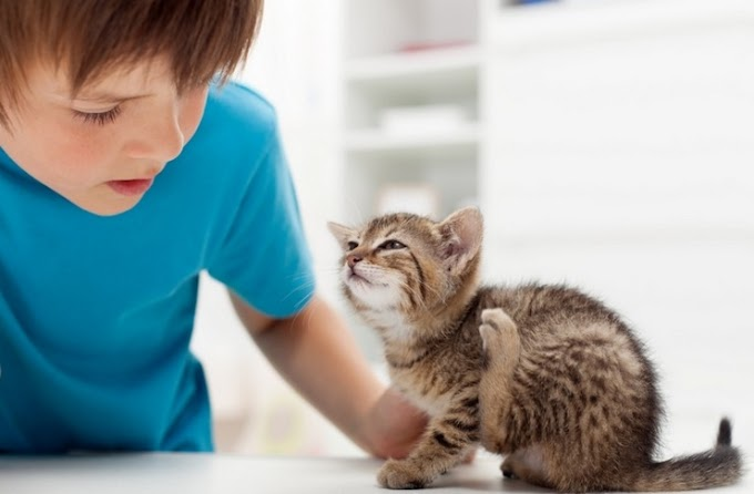 What Is the Best Flea Medicine for Cats?