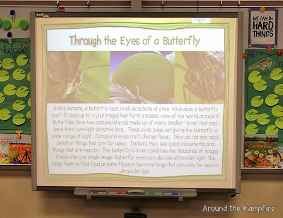 Butterfly life cycle / compound eye lesson
