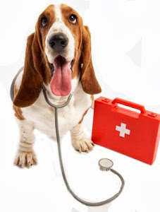 Household poisons and your pet